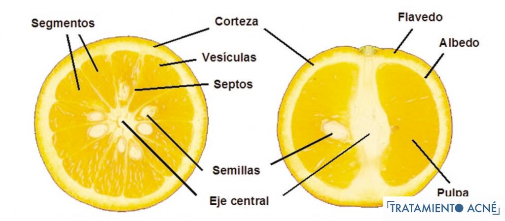 Partes de los productos cítricos